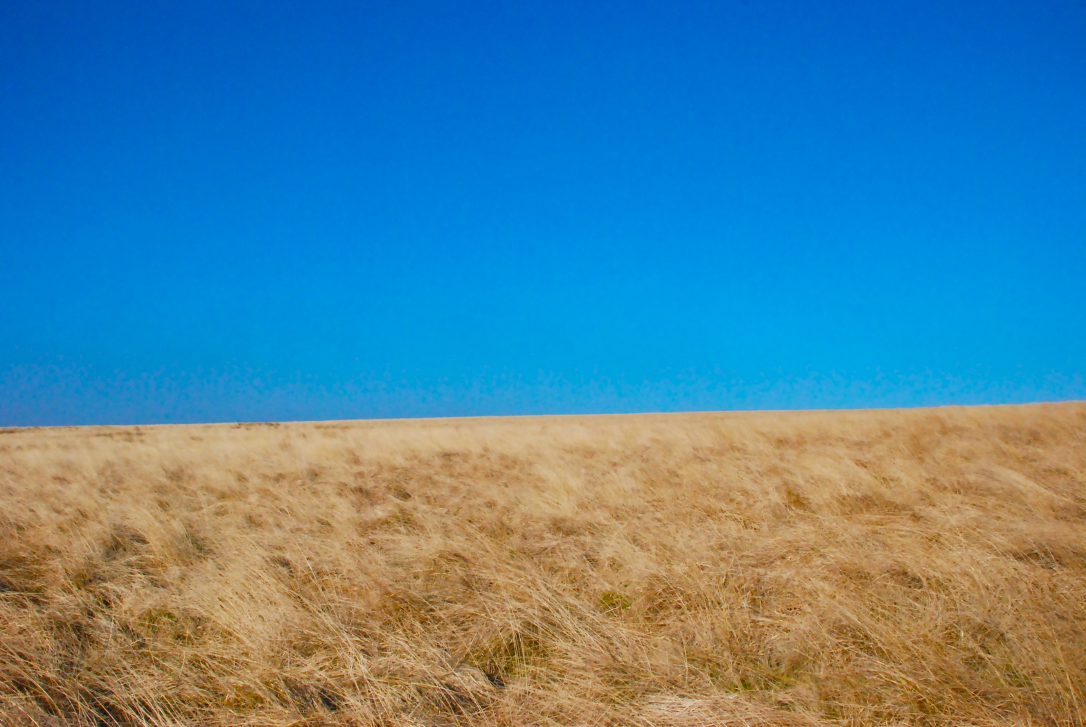 about image a dried grass moors with bright blue sky